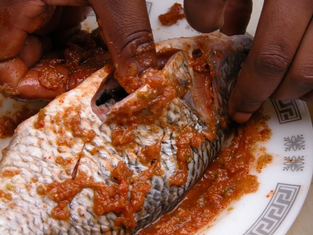 Betumiblog question 7 isn 39 t the food really unhealthy for How to make fish food